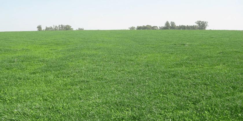 купля продажа земли сельхозназначения 1